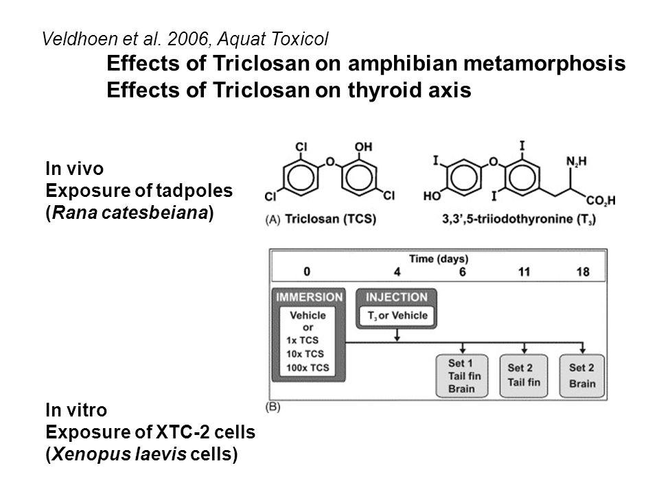 Veldhoen et al. 2006, Aquat Toxicol Effects of Triclosan on amphibian metamorphosis Effects of Triclosan on thyroid axis In vivo Exposure of tadpoles