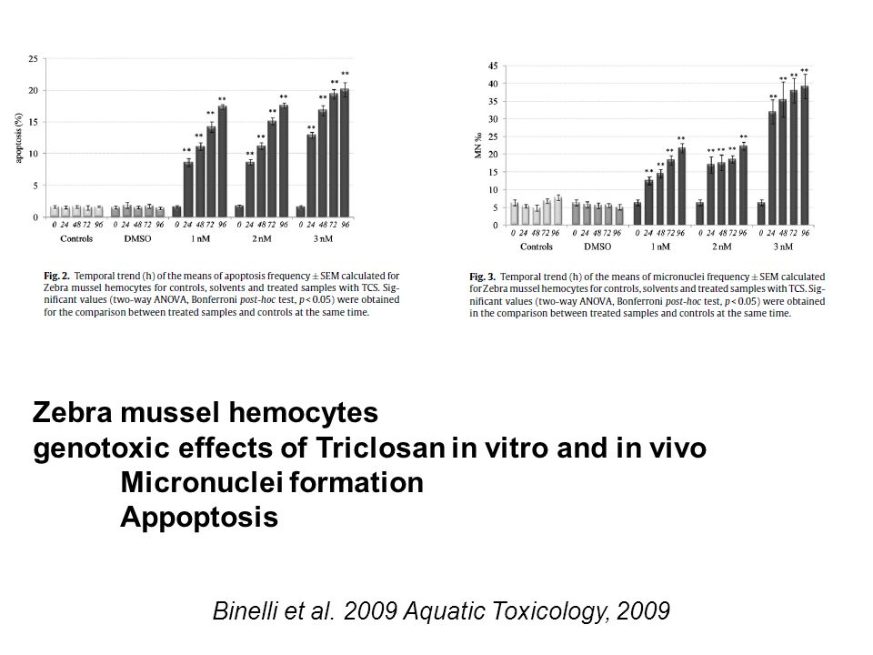 Binelli et al. 2009 Aquatic Toxicology, 2009 Zebra mussel hemocytes genotoxic effects of Triclosan in vitro and in vivo Micronuclei formation Appoptos