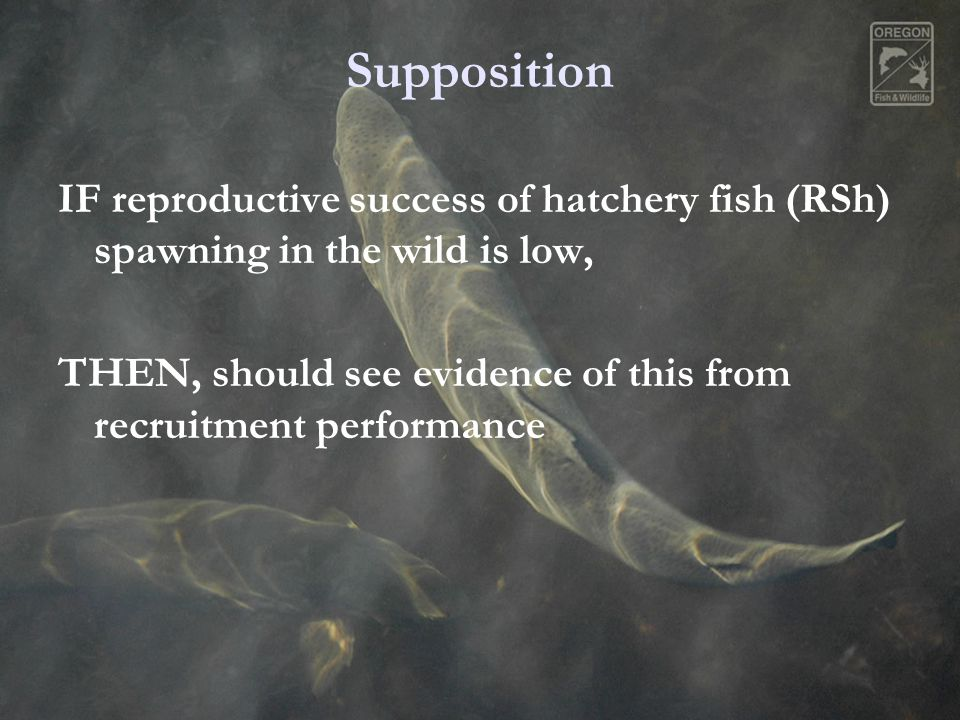 Supposition IF reproductive success of hatchery fish (RSh) spawning in the wild is low, THEN, should see evidence of this from recruitment performance