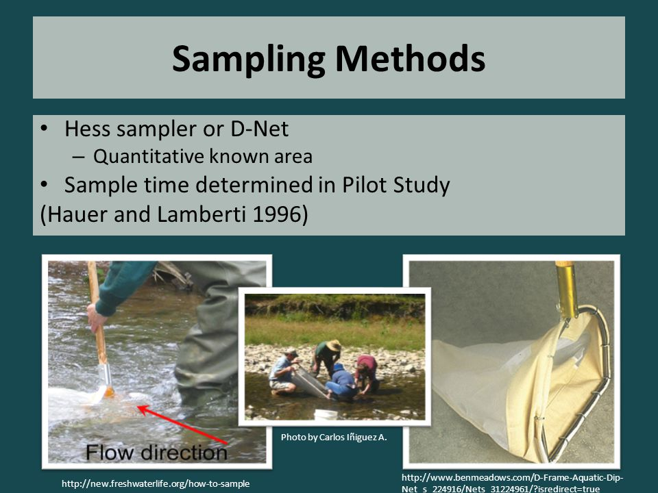 Sampling Methods Hess sampler or D-Net – Quantitative known area Sample time determined in Pilot Study (Hauer and Lamberti 1996) http://www.benmeadows.com/D-Frame-Aquatic-Dip- Net_s_224916/Nets_31224961/ isredirect=true http://new.freshwaterlife.org/how-to-sample Photo by Carlos Iñiguez A.