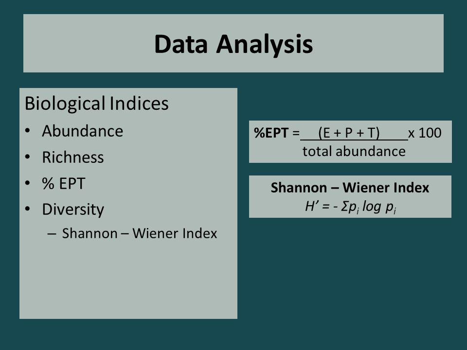 Data Analysis Biological Indices Abundance Richness % EPT Diversity – Shannon – Wiener Index Shannon – Wiener Index H' = - Σp i log p i %EPT = (E + P