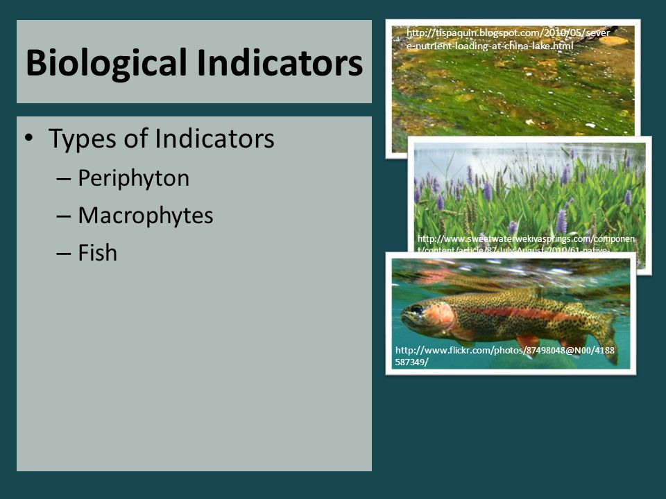 Biological Indicators Types of Indicators – Periphyton – Macrophytes – Fish http://tispaquin.blogspot.com/2010/05/sever e-nutrient-loading-at-china-lake.html http://www.sweetwaterwekivasprings.com/componen t/content/article/87-July-August-2010/61-native- aquatic-plants-plant-a-rainbow-along-your-shoreline http://www.flickr.com/photos/87498048@N00/4188 587349/