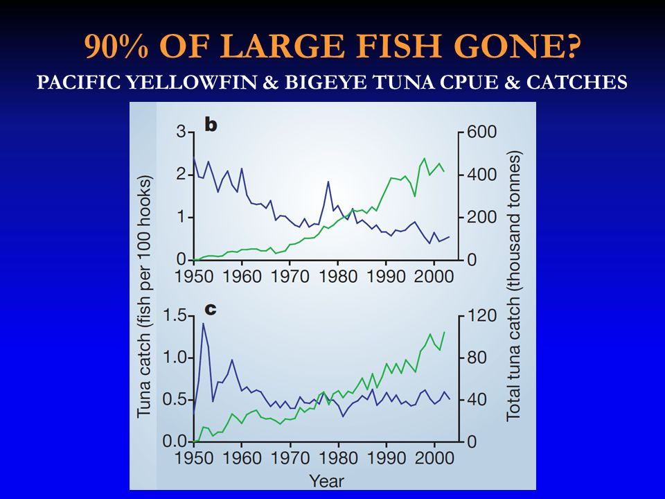 90% OF LARGE FISH GONE PACIFIC YELLOWFIN & BIGEYE TUNA CPUE & CATCHES
