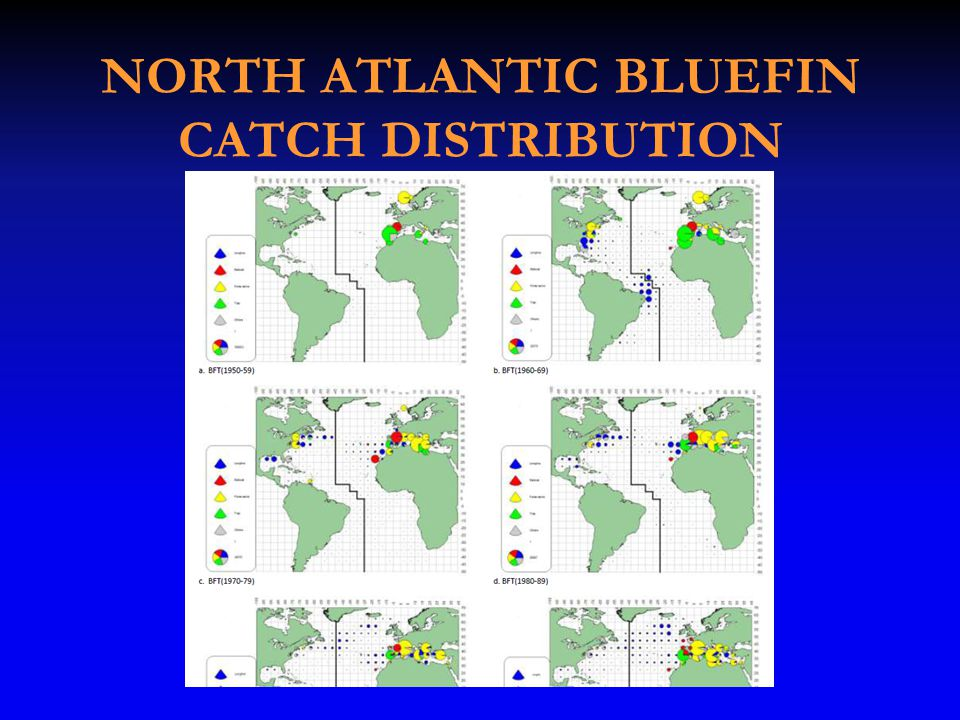 NORTH ATLANTIC BLUEFIN CATCH DISTRIBUTION
