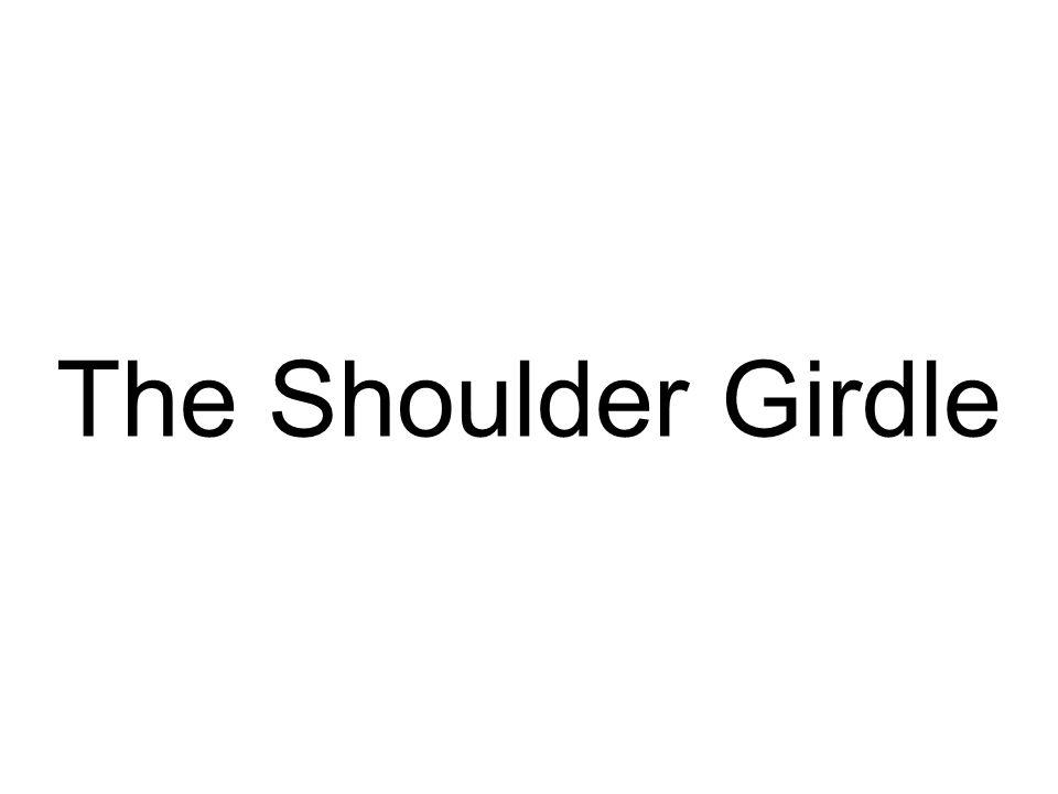 The Shoulder Girdle
