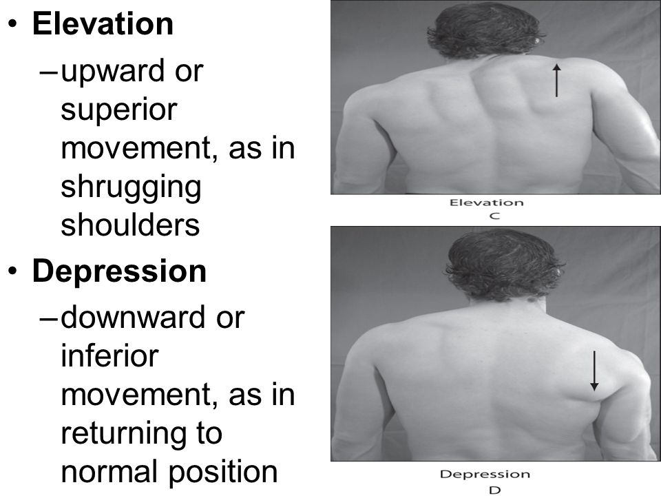 Elevation –upward or superior movement, as in shrugging shoulders Depression –downward or inferior movement, as in returning to normal position