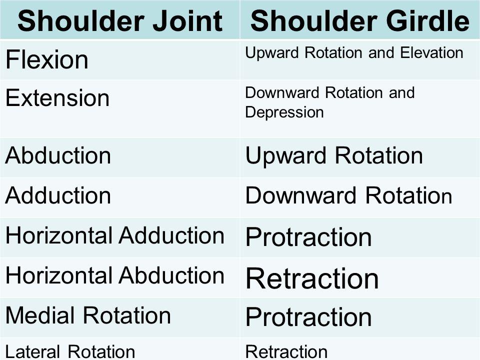 Shoulder JointShoulder Girdle Flexion Upward Rotation and Elevation Extension Downward Rotation and Depression AbductionUpward Rotation AdductionDownw
