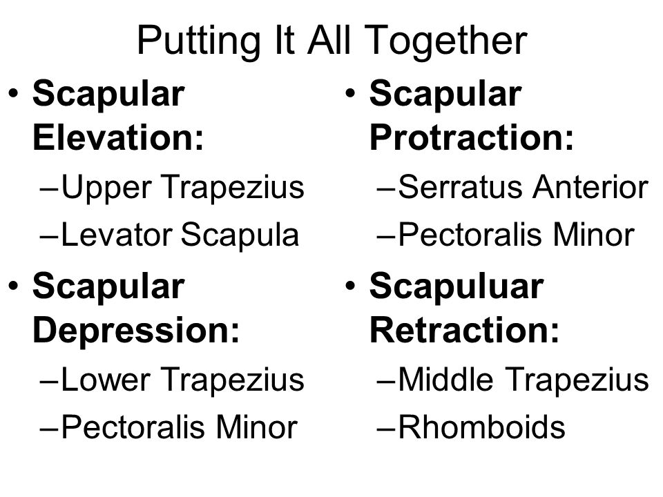 Putting It All Together Scapular Elevation: –Upper Trapezius –Levator Scapula Scapular Depression: –Lower Trapezius –Pectoralis Minor Scapular Protrac