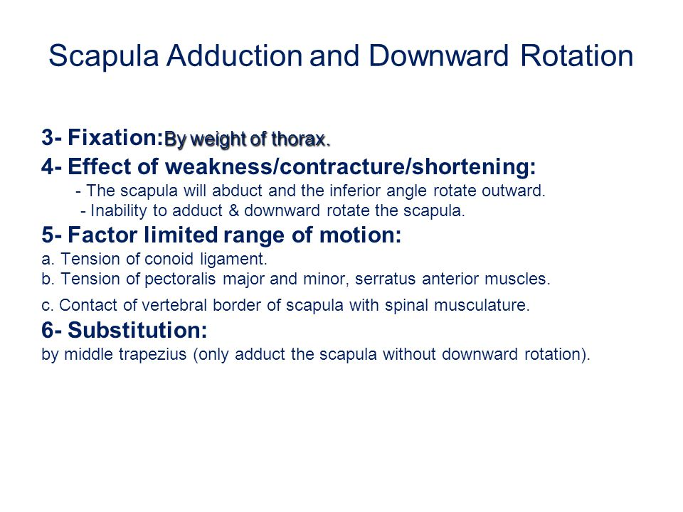 Scapula Adduction and Downward Rotation By weight of thorax. 3- Fixation: By weight of thorax. 4- Effect of weakness/contracture/shortening: - The sca