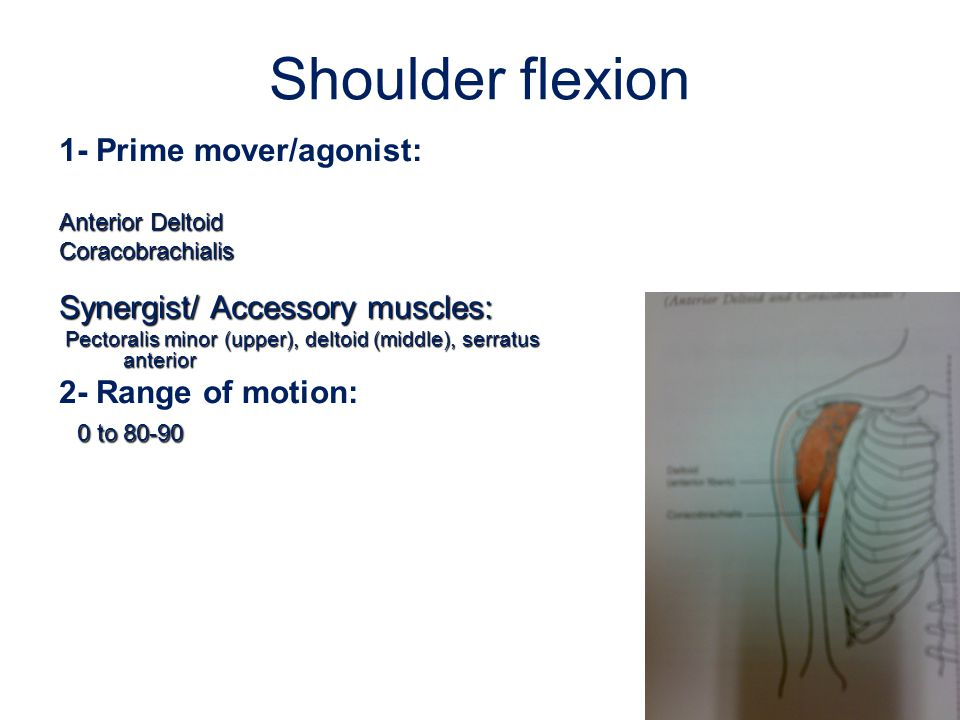Shoulder flexion 1- Prime mover/agonist: Anterior Deltoid Coracobrachialis Synergist/ Accessory muscles: Pectoralis minor (upper), deltoid (middle), s