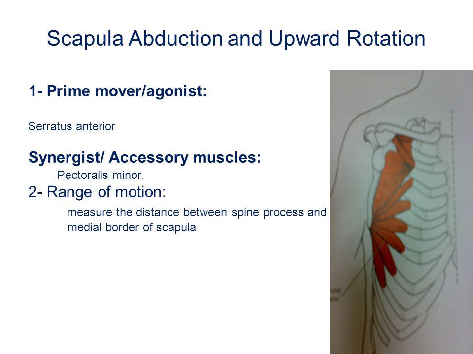 Scapula Abduction and Upward Rotation 3-Fixation : a.