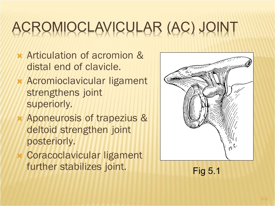 5-4  Proximal clavicle articulates with sternum and cartilage of 1 st rib.