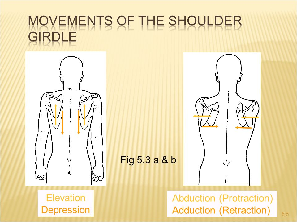 5-5 Fig 5.3 a & b Abduction (Protraction) Adduction (Retraction) Elevation Depression