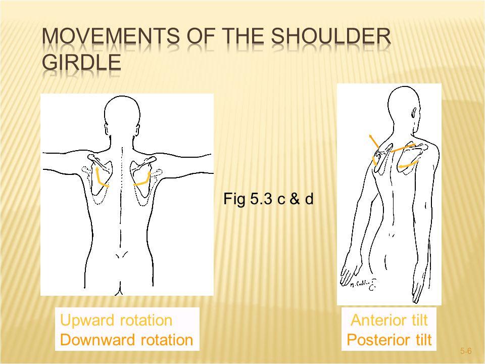 5-17  Flexion / Extension  Hyperextension  Circumduction  Abduction / Adduction  Horizontal  Diagonal  Internal / External Rotation Internal rotation External rotation