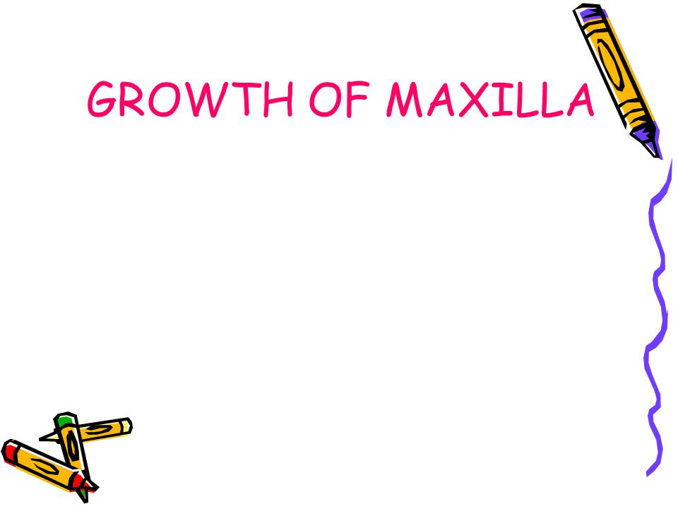 POST-NATAL GROWTH Of MAXILLA Since, the maxillary complex is attached to the cranial base, there is a strong influence of the latter on the former.