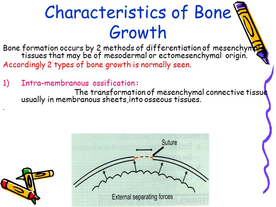 Characteristics of Bone Growth Bone formation occurs by 2 methods of differentiation of mesenchymal tissues that may be of mesodermal or ectomesenchym