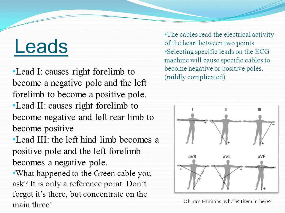 Leads Lead I: causes right forelimb to become a negative pole and the left forelimb to become a positive pole. Lead II: causes right forelimb to becom