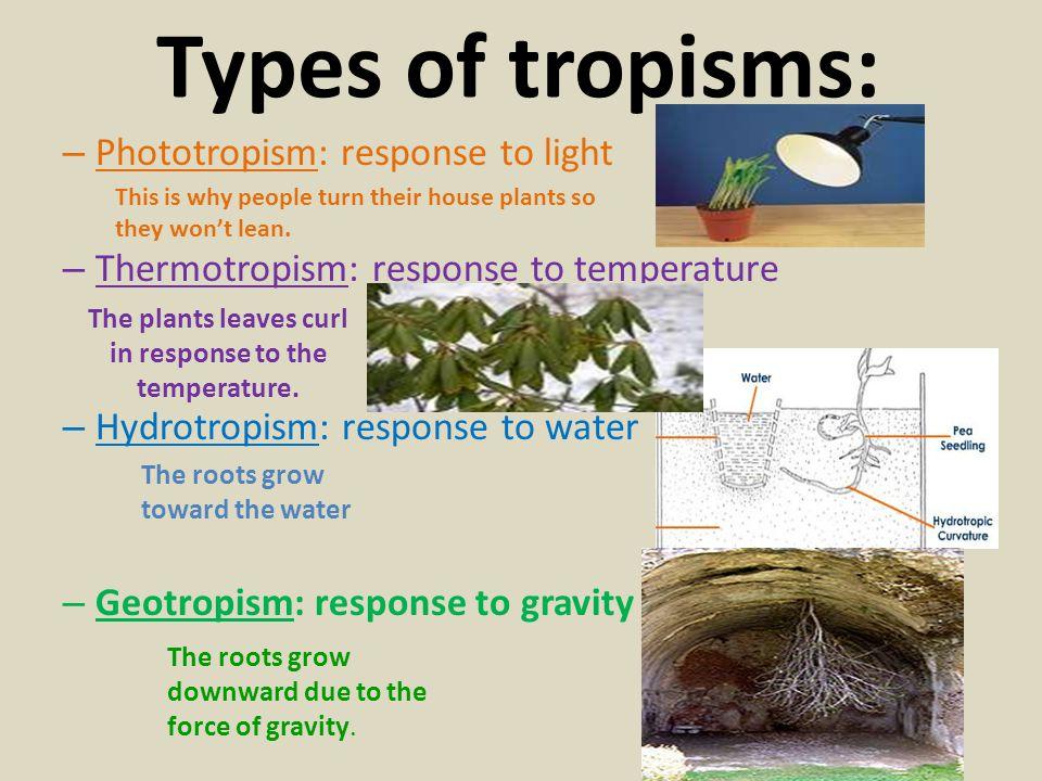 Types of tropisms: – Phototropism: response to light – Thermotropism: response to temperature – Hydrotropism: response to water – Geotropism: response