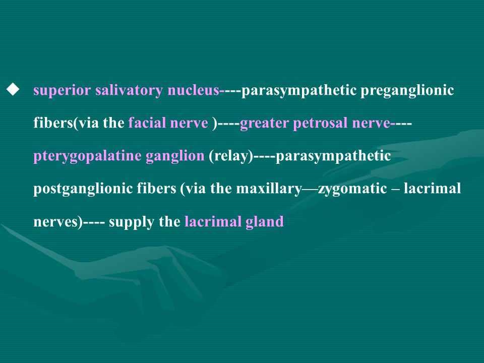  superior salivatory nucleus----parasympathetic preganglionic fibers(via the facial nerve )----greater petrosal nerve---- pterygopalatine ganglion (relay)----parasympathetic postganglionic fibers (via the maxillary—zygomatic – lacrimal nerves)---- supply the lacrimal gland