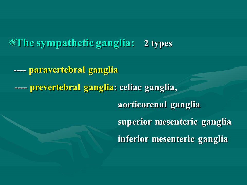  The sympathetic ganglia: 2 types ---- paravertebral ganglia ---- prevertebral ganglia: celiac ganglia, aorticorenal ganglia superior mesenteric gang