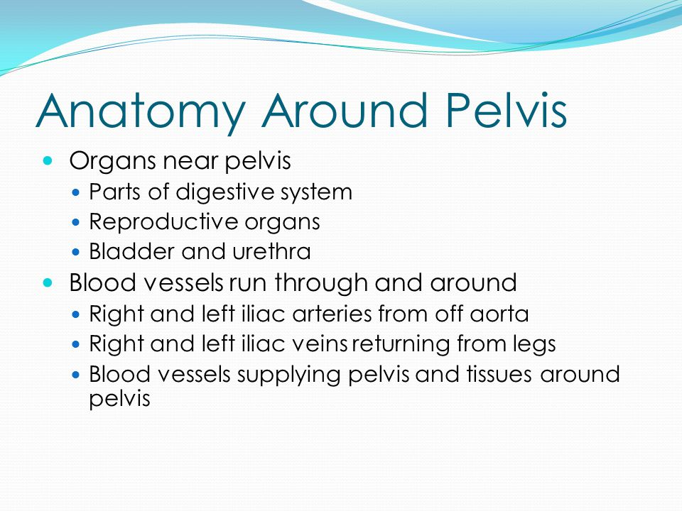 Function of Pelvis Pelvis bears weight of upper body Balances weight for legs when standing Protect blood vessels and organs Also serves as connection point for numerous leg muscles