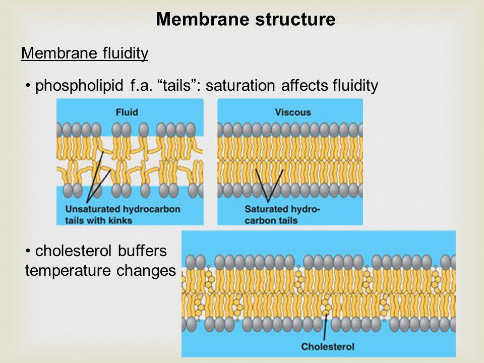 Membrane fluidity phospholipid f.a.