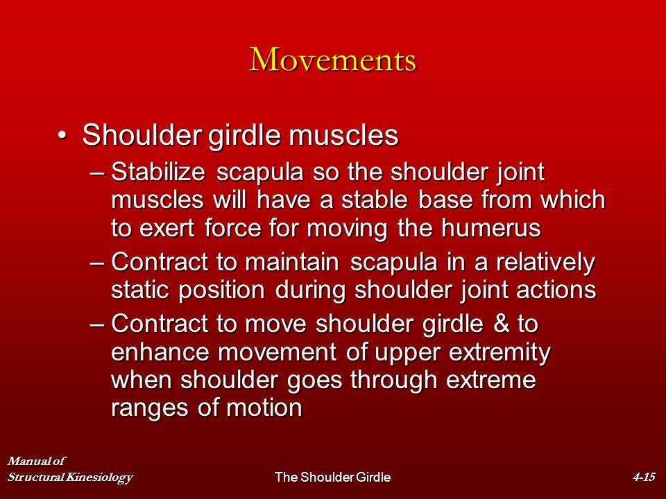 Manual of Structural KinesiologyThe Shoulder Girdle4-15 Movements Shoulder girdle musclesShoulder girdle muscles –Stabilize scapula so the shoulder jo
