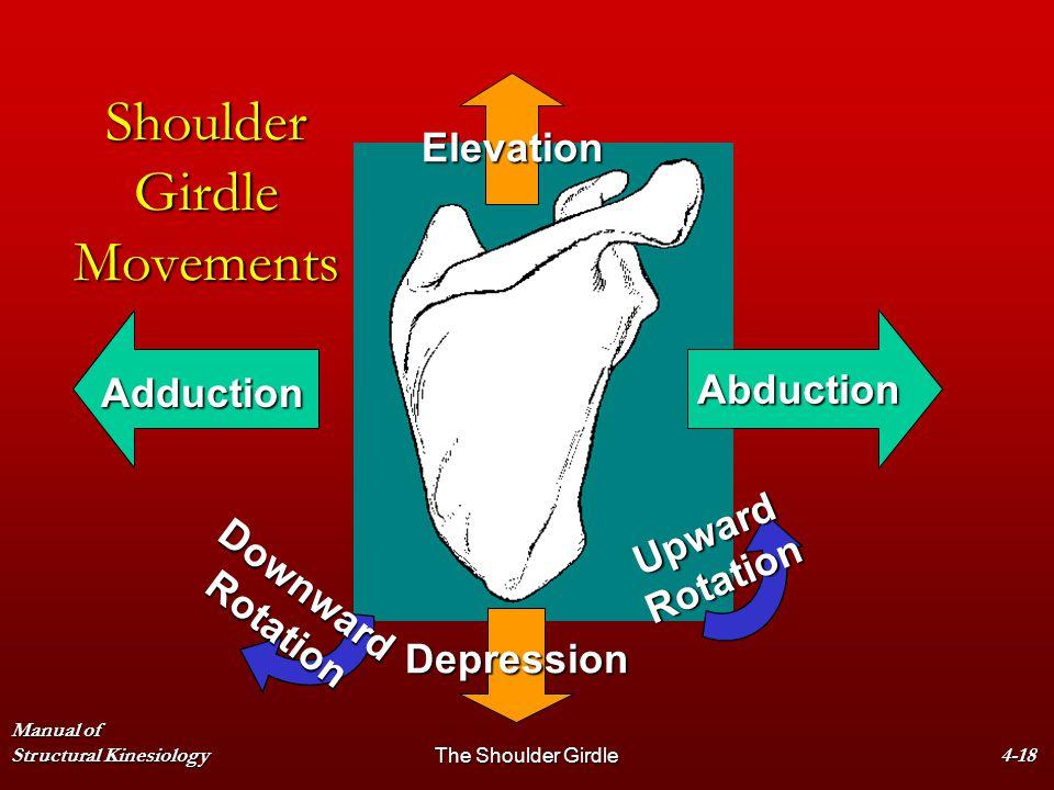 Manual of Structural KinesiologyThe Shoulder Girdle4-18 Shoulder Girdle Movements Elevation Depression Abduction Adduction DownwardRotation UpwardRota