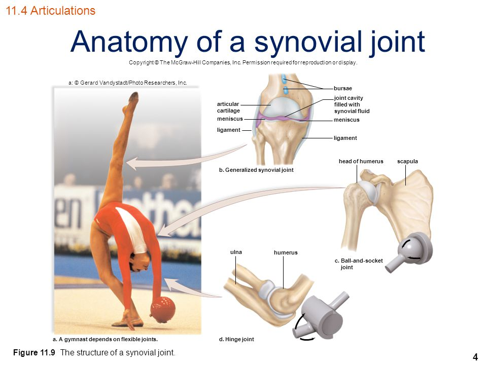 4 Anatomy of a synovial joint 11.4 Articulations Copyright © The McGraw-Hill Companies, Inc.