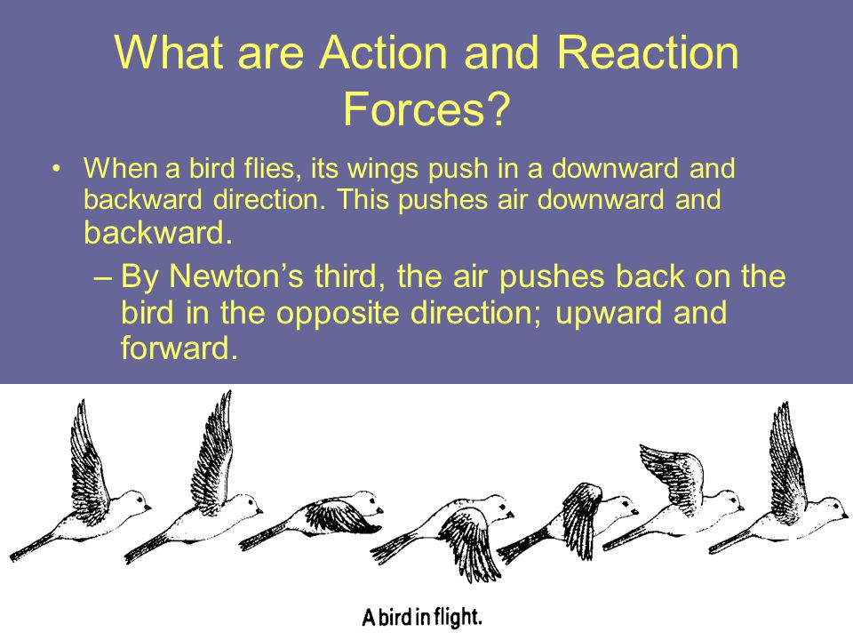What are Action and Reaction Forces? When a bird flies, its wings push in a downward and backward direction. This pushes air downward and backward. –B