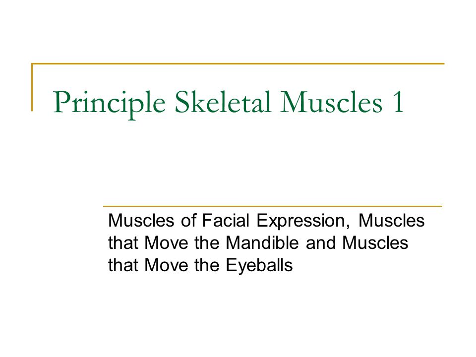 Muscles that Move the Mandible Also known as muscles of mastication because they are used for biting and chewing.