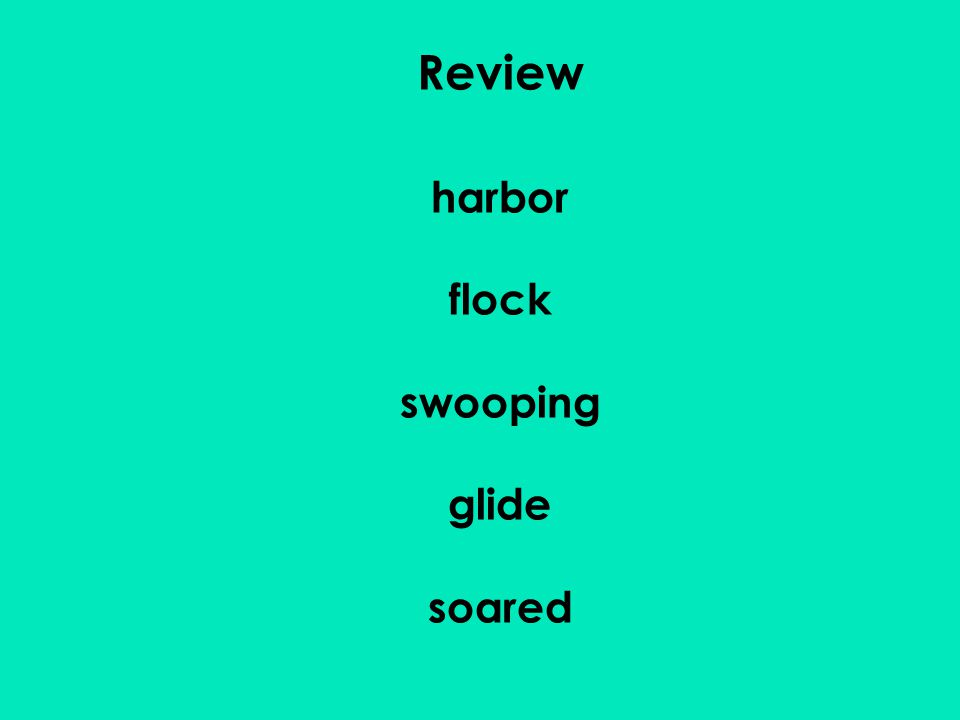 Review harbor flock swooping glide soared