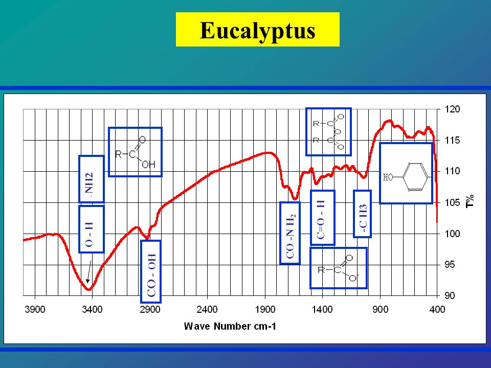 Eucalyptus O - H - NH2 CO - OH CO -N H 2 -C H3 C=O - H