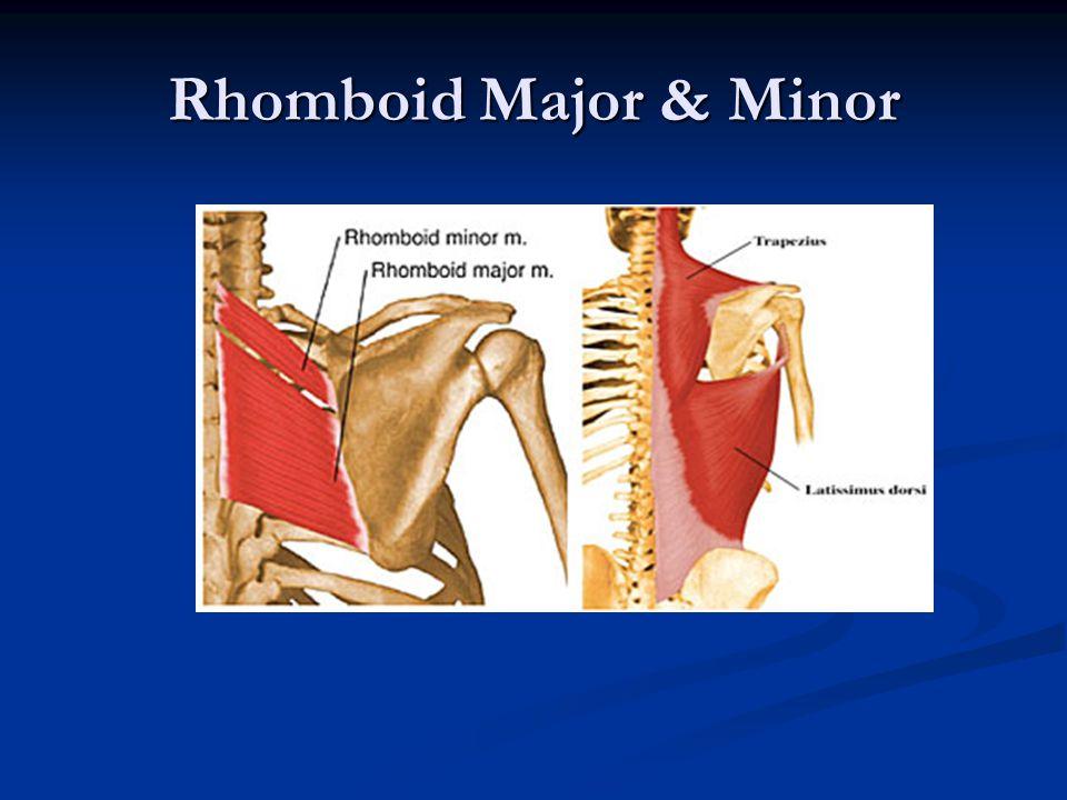 Rhomboid Major & Minor