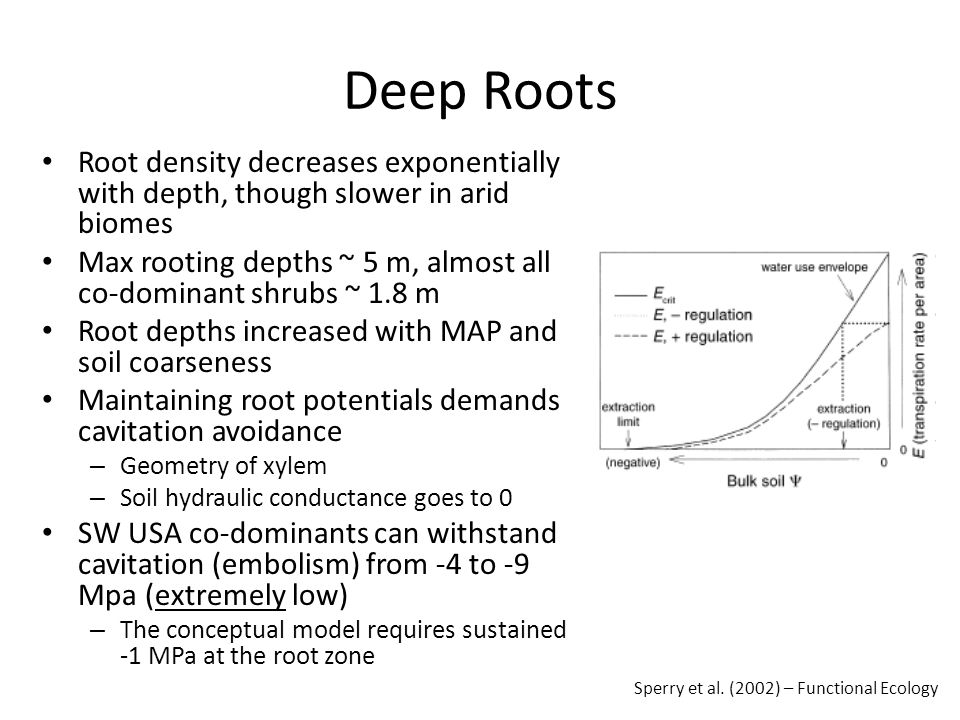 Deep Roots Root density decreases exponentially with depth, though slower in arid biomes Max rooting depths ~ 5 m, almost all co-dominant shrubs ~ 1.8