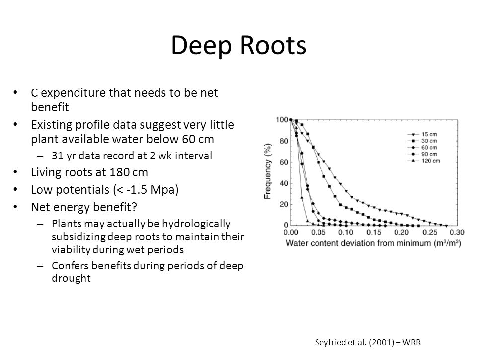 Deep Roots C expenditure that needs to be net benefit Existing profile data suggest very little plant available water below 60 cm – 31 yr data record at 2 wk interval Living roots at 180 cm Low potentials (< -1.5 Mpa) Net energy benefit.