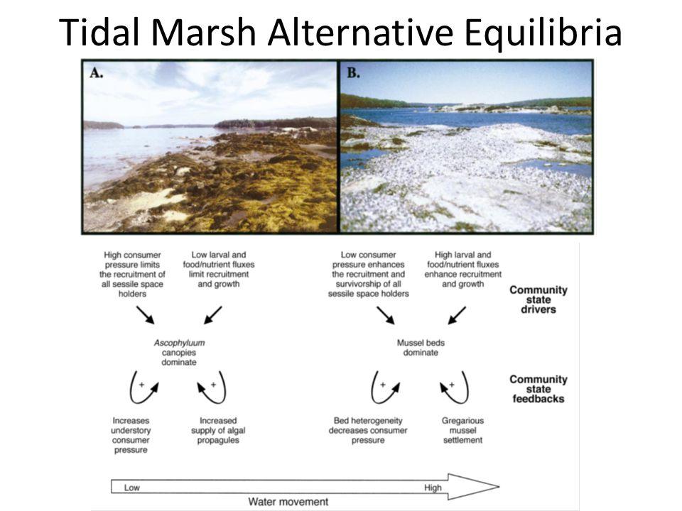 Tidal Marsh Alternative Equilibria