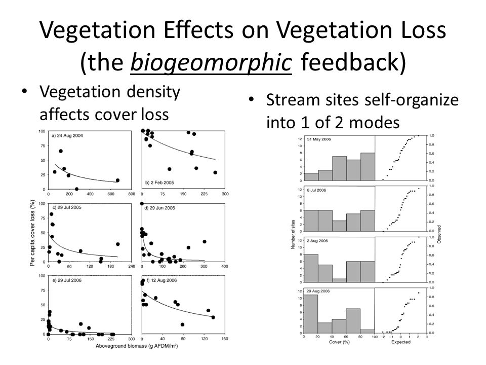 Vegetation Effects on Vegetation Loss (the biogeomorphic feedback) Vegetation density affects cover loss Stream sites self-organize into 1 of 2 modes