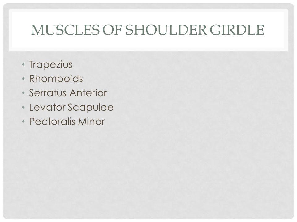 MUSCLES OF SHOULDER GIRDLE Trapezius Rhomboids Serratus Anterior Levator Scapulae Pectoralis Minor