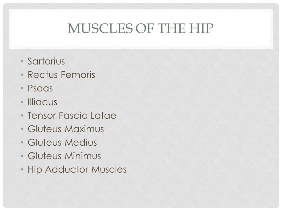 MUSCLES OF THE HIP Sartorius Rectus Femoris Psoas Illiacus Tensor Fascia Latae Gluteus Maximus Gluteus Medius Gluteus Minimus Hip Adductor Muscles