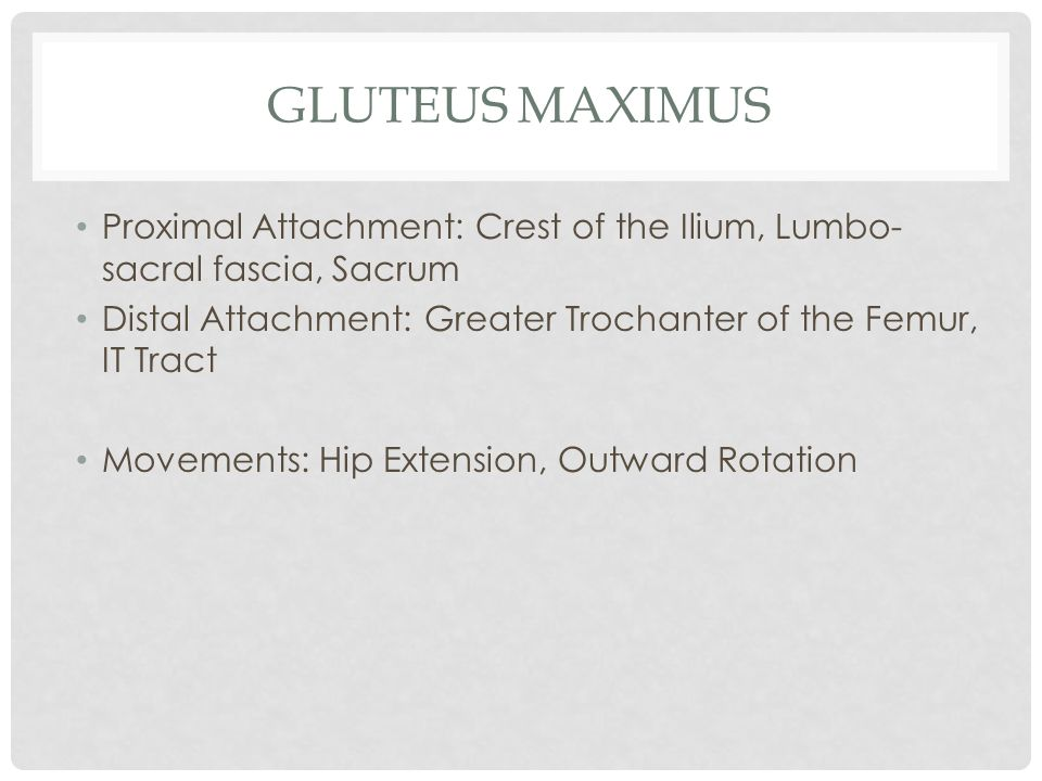 GLUTEUS MAXIMUS Proximal Attachment: Crest of the Ilium, Lumbo- sacral fascia, Sacrum Distal Attachment: Greater Trochanter of the Femur, IT Tract Mov