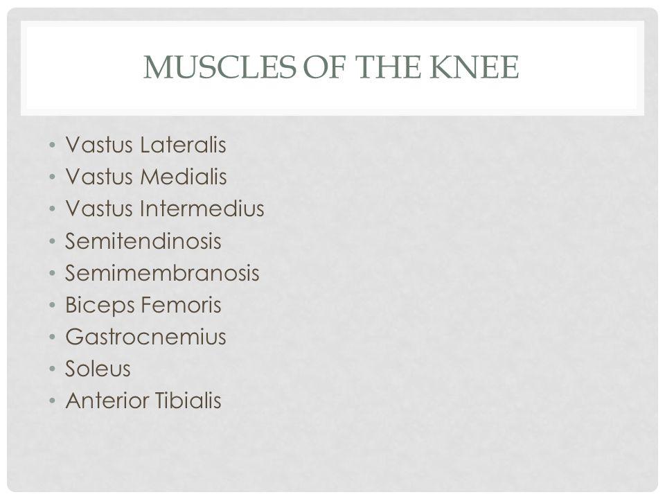 MUSCLES OF THE KNEE Vastus Lateralis Vastus Medialis Vastus Intermedius Semitendinosis Semimembranosis Biceps Femoris Gastrocnemius Soleus Anterior Ti