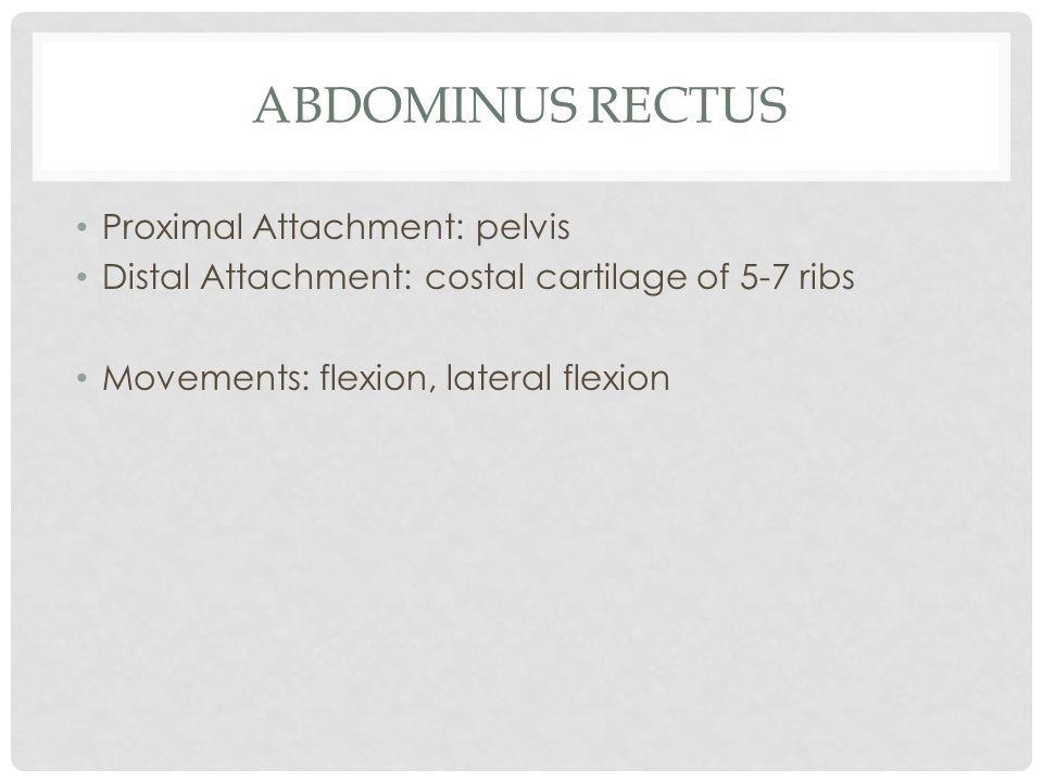 ABDOMINUS RECTUS Proximal Attachment: pelvis Distal Attachment: costal cartilage of 5-7 ribs Movements: flexion, lateral flexion