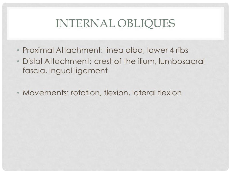 INTERNAL OBLIQUES Proximal Attachment: linea alba, lower 4 ribs Distal Attachment: crest of the ilium, lumbosacral fascia, ingual ligament Movements: