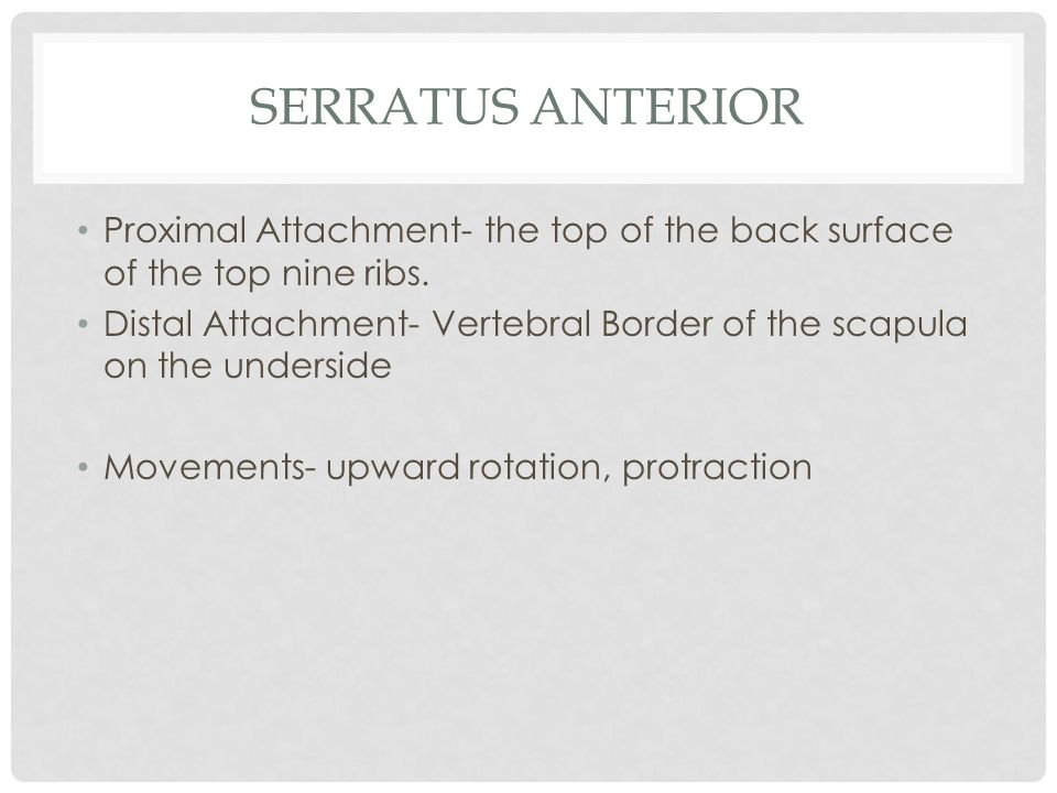 SERRATUS ANTERIOR Proximal Attachment- the top of the back surface of the top nine ribs. Distal Attachment- Vertebral Border of the scapula on the und