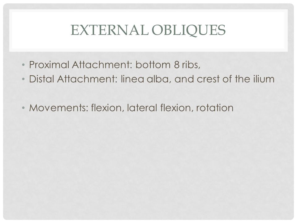 EXTERNAL OBLIQUES Proximal Attachment: bottom 8 ribs, Distal Attachment: linea alba, and crest of the ilium Movements: flexion, lateral flexion, rotat
