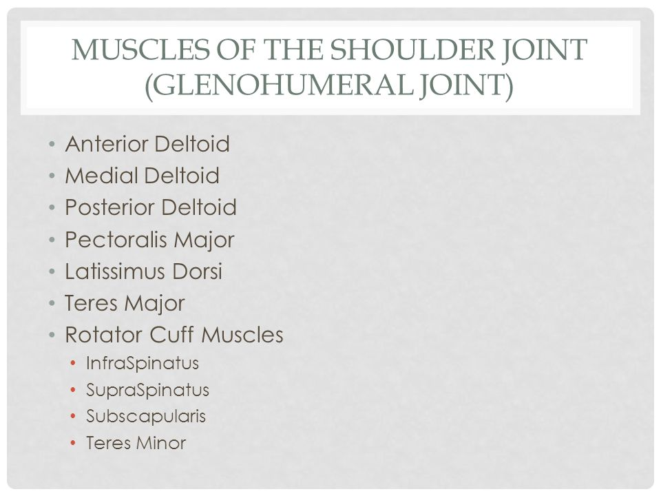 ANTERIOR DELTOID Proximal Attachment-distal anterior 1/3 of the clavicle Distal Attachment- deltoid tuberosity (humerus) Movements: flexion, inward rotation, minor in horizontal adduction
