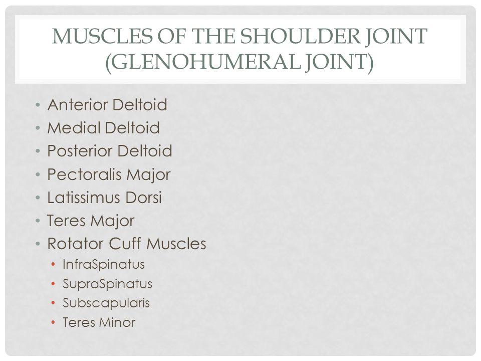 MUSCLES OF THE SHOULDER JOINT (GLENOHUMERAL JOINT) Anterior Deltoid Medial Deltoid Posterior Deltoid Pectoralis Major Latissimus Dorsi Teres Major Rot