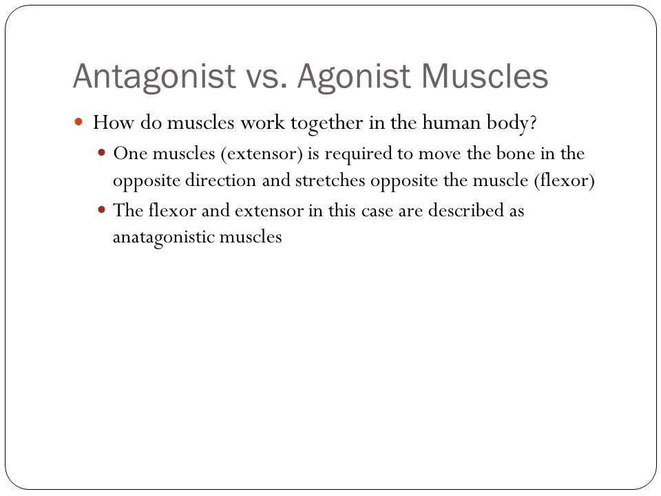 Antagonist vs. Agonist Muscles How do muscles work together in the human body? One muscles (extensor) is required to move the bone in the opposite dir
