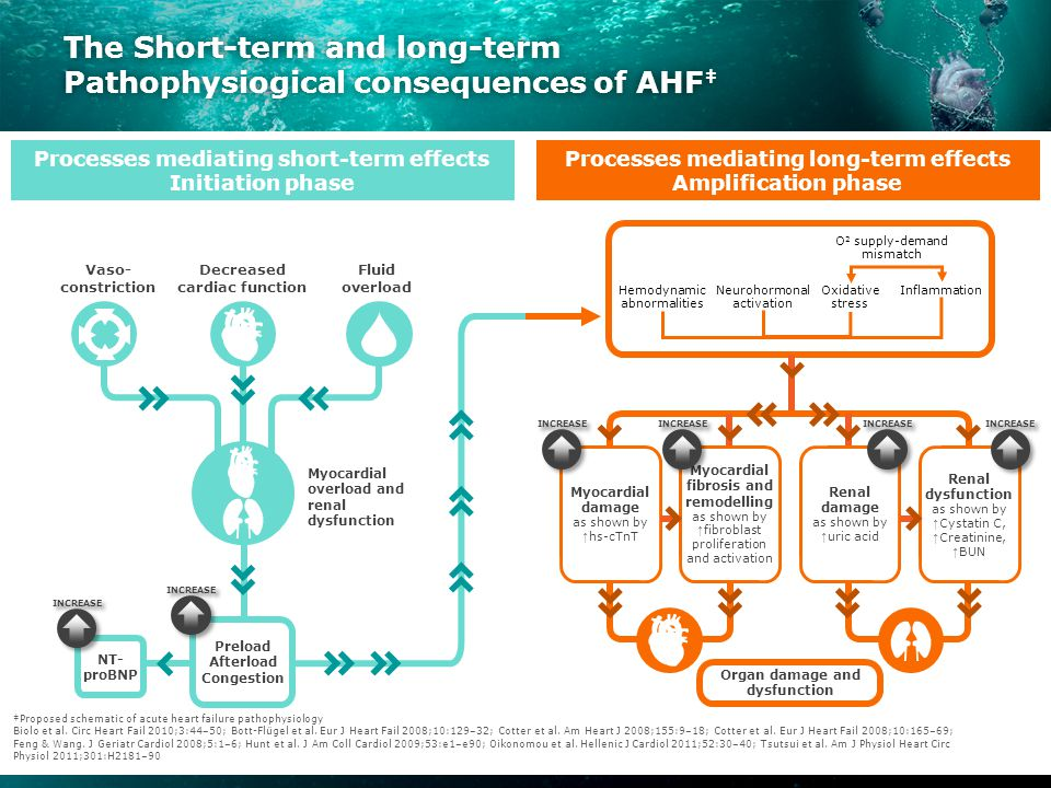 The Short-term and long-term Pathophysiogical consequences of AHF ‡ NT-pr Preload Afterload Congestion NT- proBNP Vaso- constriction Decreased cardiac function Fluid overload Myocardial overload and renal dysfunction Organ damage and dysfunction Hemodynamic abnormalities Neurohormonal activation Oxidative stress Inflammation O 2 supply-demand mismatch ‡Proposed schematic of acute heart failure pathophysiology Biolo et al.